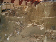 Mammoth Site, SD